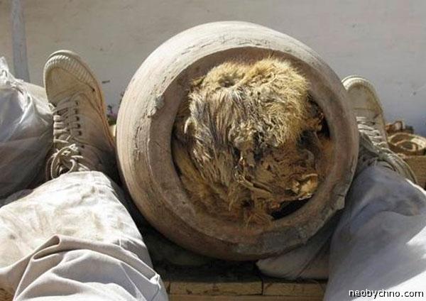 Мумия собаки из Египта