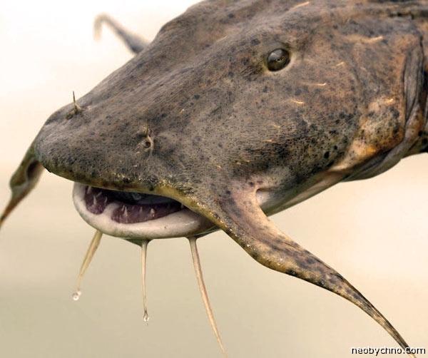 Удушение рыбой в Индии