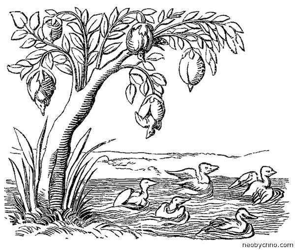 Казарковое древо