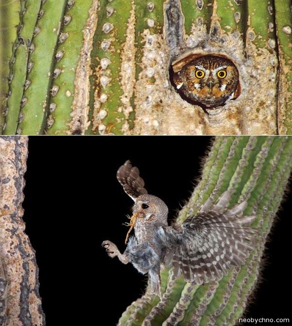 cactus-birds-2