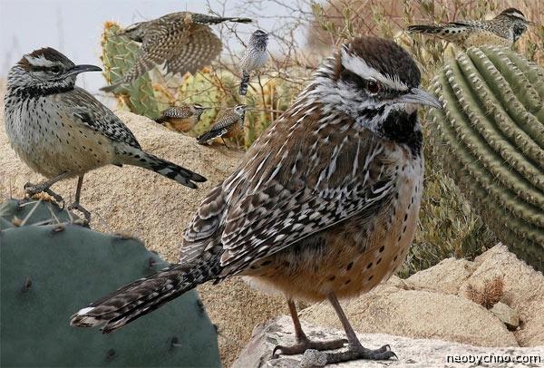 cactus-birds-3