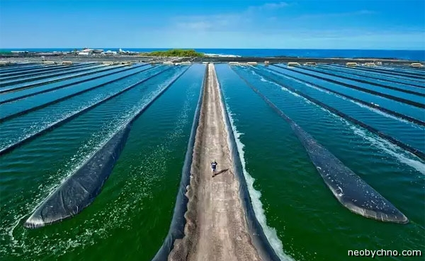 15-spirulina-farm