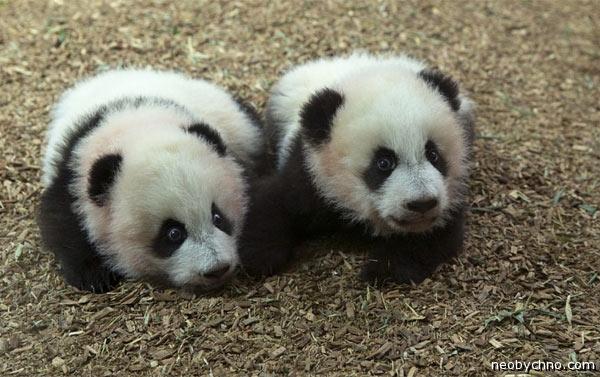 toronto-pandas-1