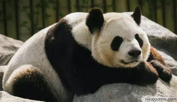 toronto-pandas-2