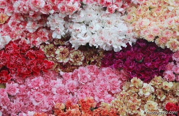 900-flowers-01