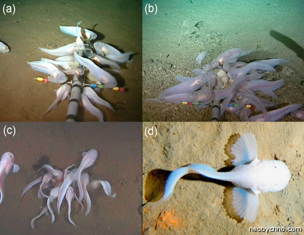 sea-snails-4