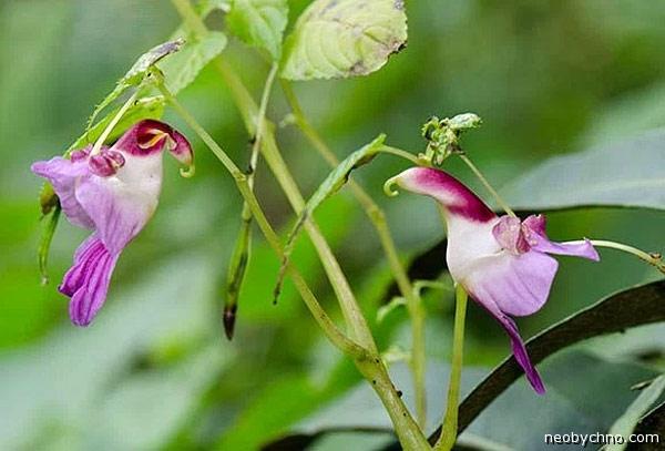 цветок или птица