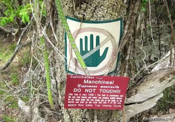 ядовитое дерево