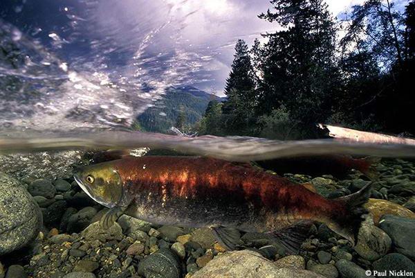 Красивые фото дикой природы