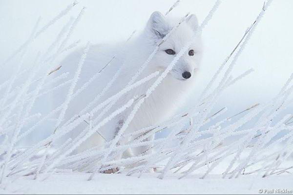 Невероятно красивые фото диких
