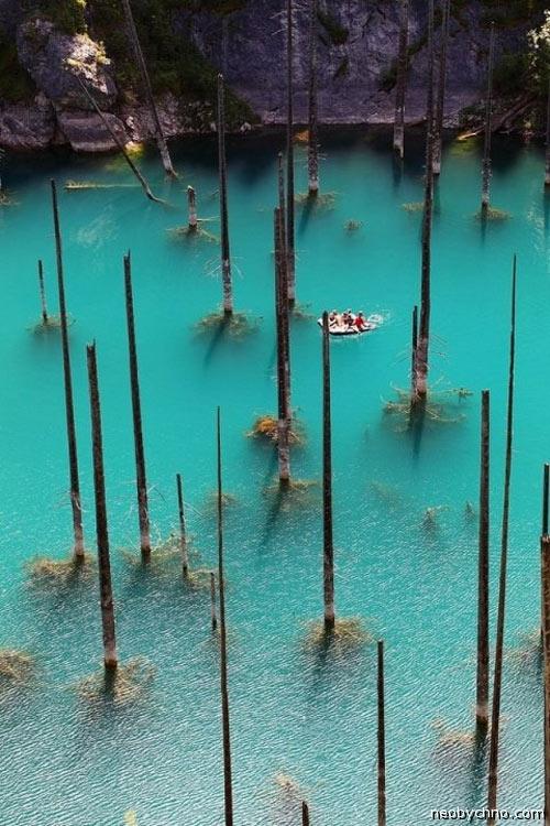 Дитя катастрофы — озеро Каинды, и его подводный бор